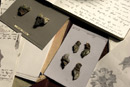 A shot of a collection of drawings, fossils and notes scattered on a desk
