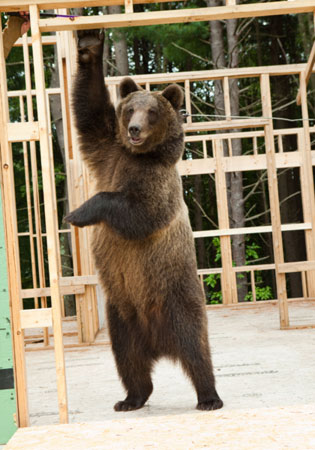 Film Education Resources Furry Facts Grizzly Bear