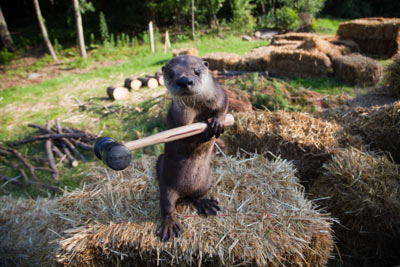 Still image from the film Furry Vengeance. An otter stands upright on a hay bale, swinging a rubber mallet