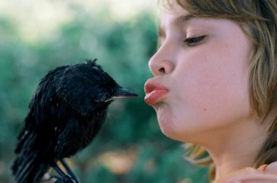 A boy kisses a jackdaw which is sitting on his hand